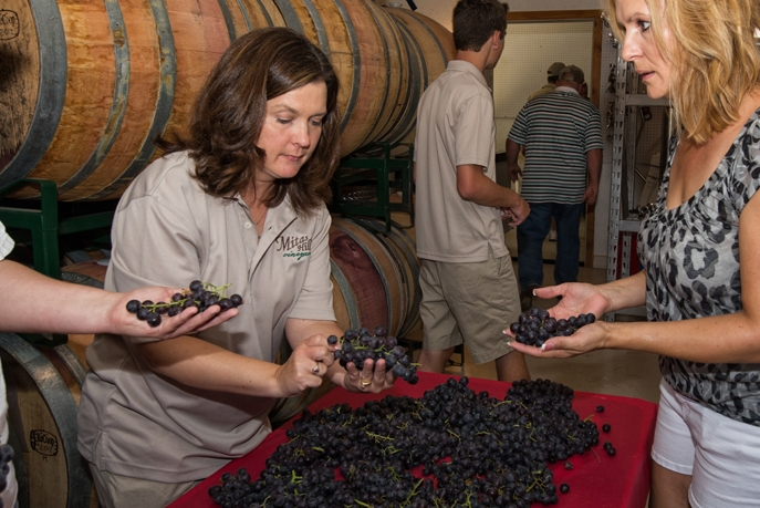 Picture of Lisa the head wine maker and others sorting grapes just brought in from harvest.